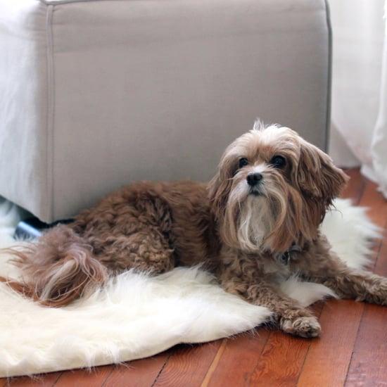 قواعد يجب على مالكي الكلاب اتباعها عند مشاركة الآخرين السكن