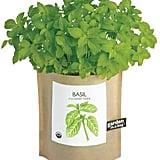 Basil in a Bag