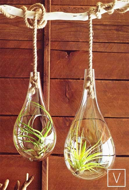 Roost Recycled Glass Bubble Hanging Terrariums ($74)