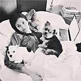 Emmy Rossum shared a snuggle with her pups. Source: Instagram user emmyrossum