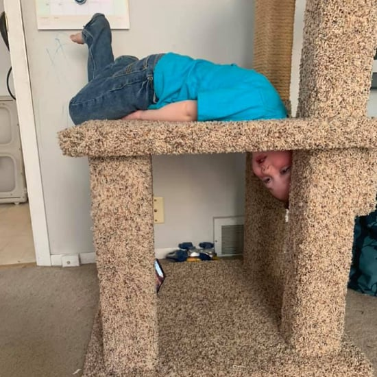 Boy Who Got His Head Stuck in a Cat Tree | Funny Photos