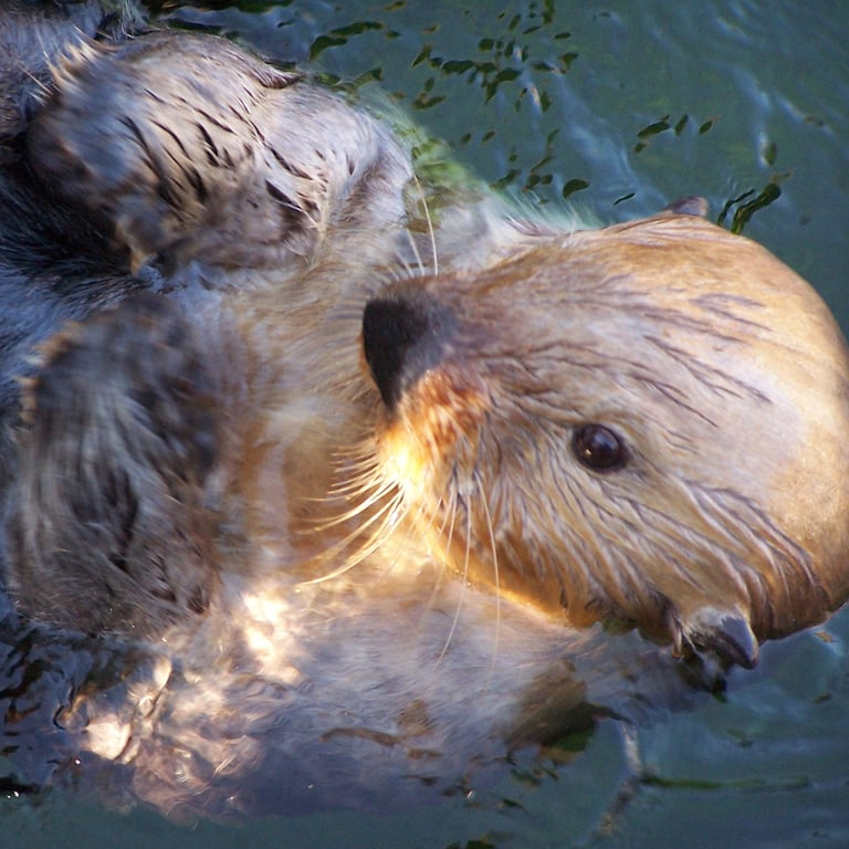 Lounging in the water is great. You otter join me sometime! Source: Flickr user Dom H UK