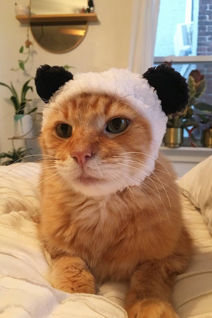 Bear Cat Cap ($8)
