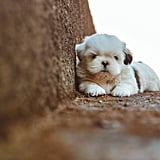 Cute Photos of Dogs