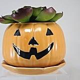 Jack-o'-Lantern Planter Halloween Pumpkin