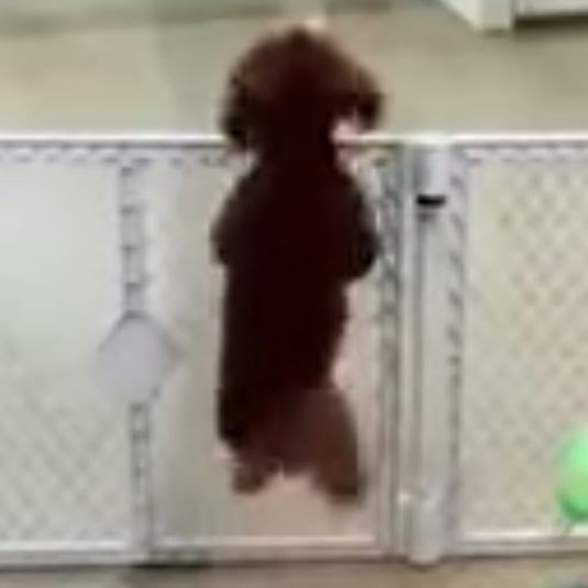 Excited Puppy Dancing | Video