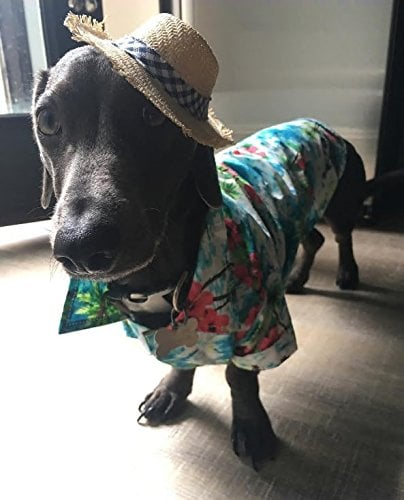 Hawaiian Shirt For Dogs on Amazon