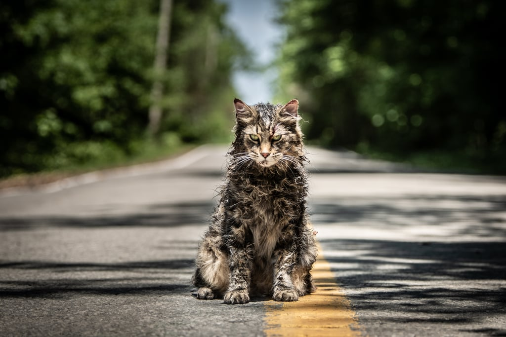 The Cat In Pet Sematary