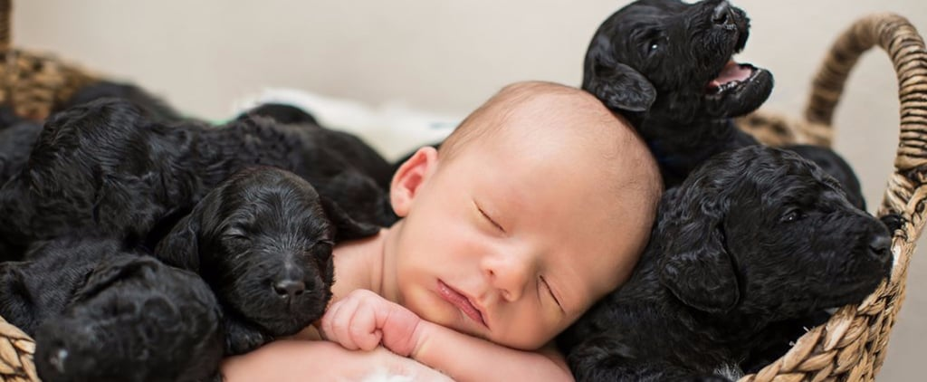 This Newborn Baby Photo Shoot Featuring 9 Puppies Is Going to Ruin You