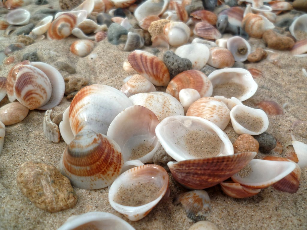 Collect seashells.