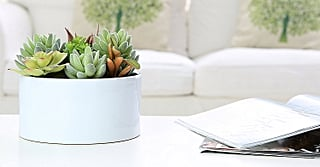 9 Adorable Faux Succulents on Amazon For Anyone Who Isn't Ready to Be a Real Plant Parent