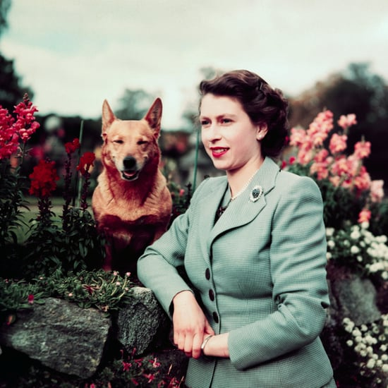 How Many Corgis Did the Queen Have?