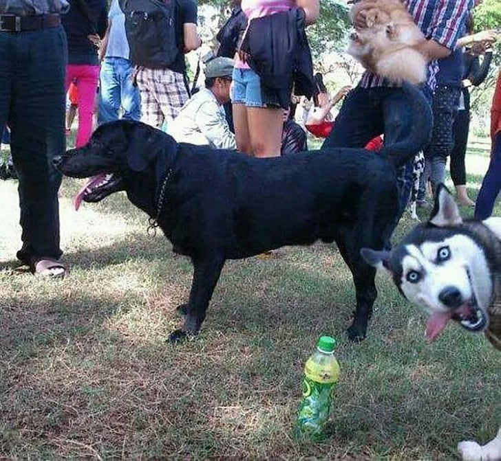Animal Photobombs That Can't Ever Be Unseen