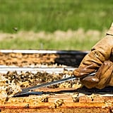 Pollen Indicates the Country of Origin and Affects the Flavor of the Honey