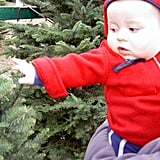 Take them to a tree farm and let them help pick out the Christmas tree.