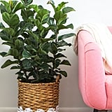 Use Houseplants