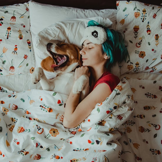 Should I Let My Dog Sleep in My Bed?