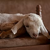 Photos of Newborn Baby Goats
