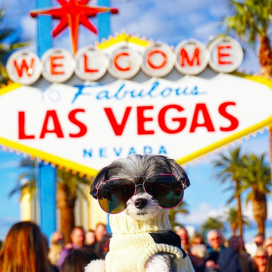 Tinkerbelle the Dog's Trip to Las Vegas