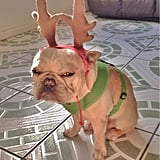 The person who wrapped their dog in Christmas spirit