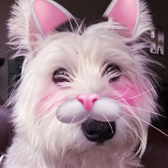 Snapchat Filters on Pets