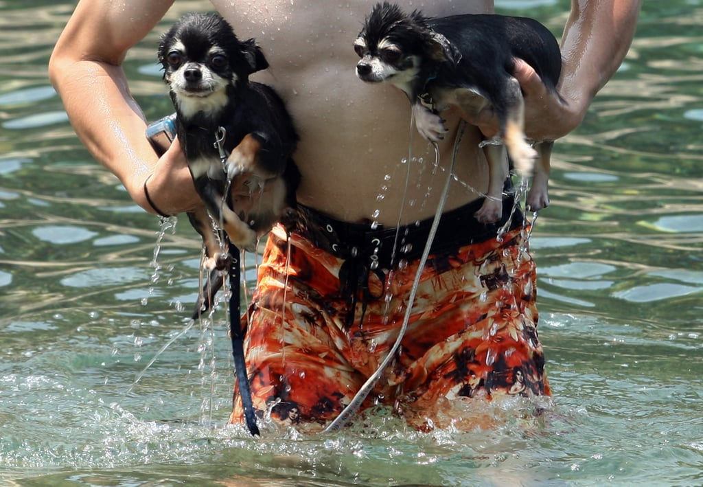 A pair of Chihuahuas catch a ride to shore.