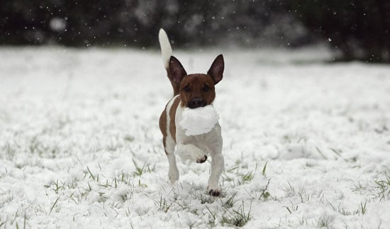 Fetch Time Goes to the Snow?