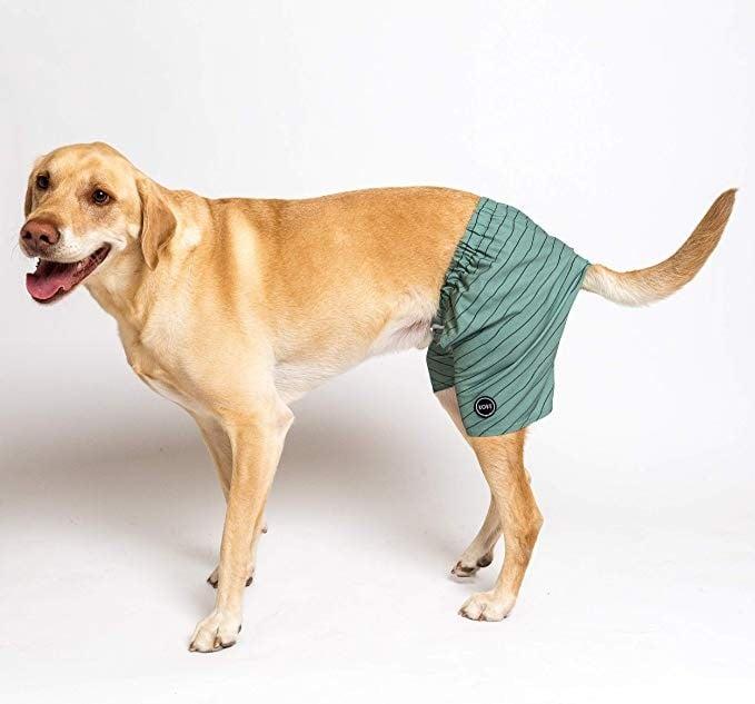 Dog Swim Trunks