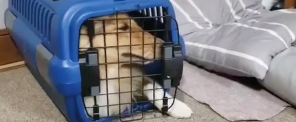 Watch This Hilarious Dog Squeeze Herself Into a Tiny Crate