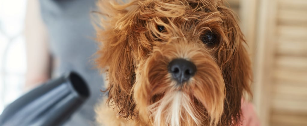 How to Fix Matted Dog Hair