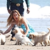Lauren Conrad shared her photo shoot with five white puppies.