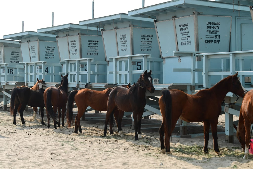 Owners tie their horses to lifeguard stations to escape the deadly fires.