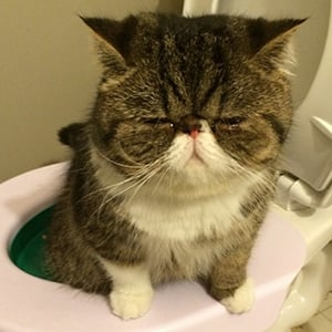 Litter Kwitter Cat Toilet-Training Tool Tips