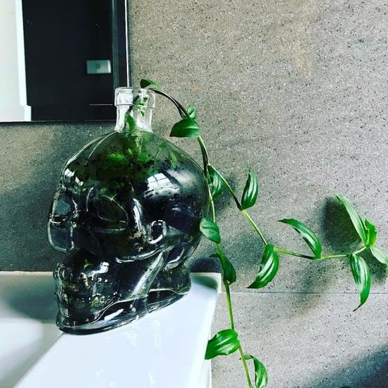 Skull Succulent Terrariums