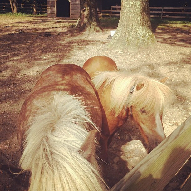 Leighton Meester took pictures of ponies. Source: Instagram user itsmeleighton