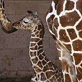 This mother shows some affection and helps clean up her baby.