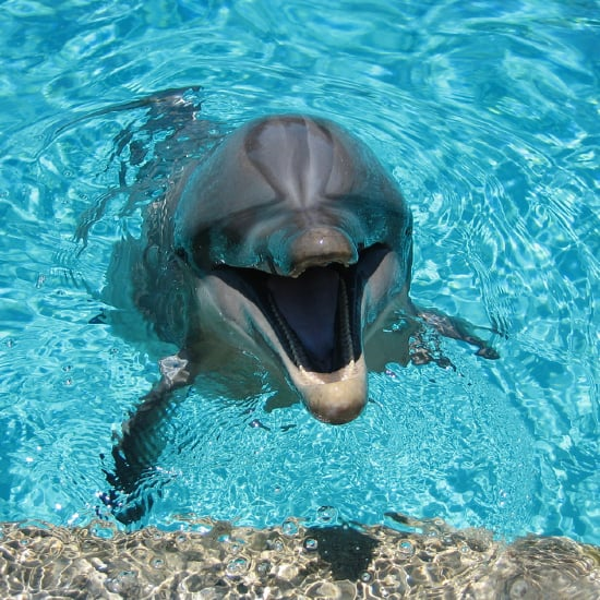Dolphin-Assisted Childbirth