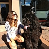 Luke Mitchell snapped his fiancée Rebecca Breeds with a massive dog. Source: Twitter user LukeMitchell__