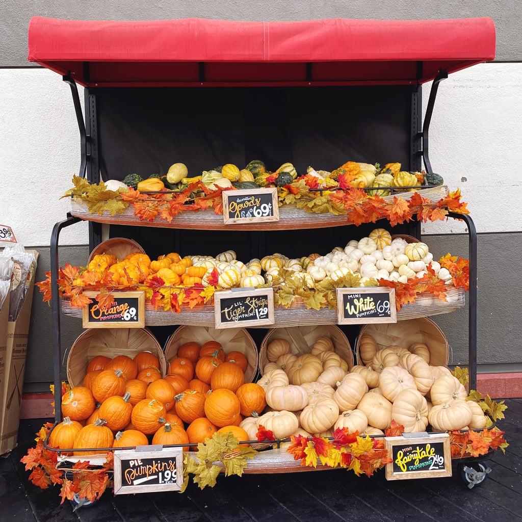 Trader Joe's Has Big and Small Pumpkins For 2021 Fall Decor