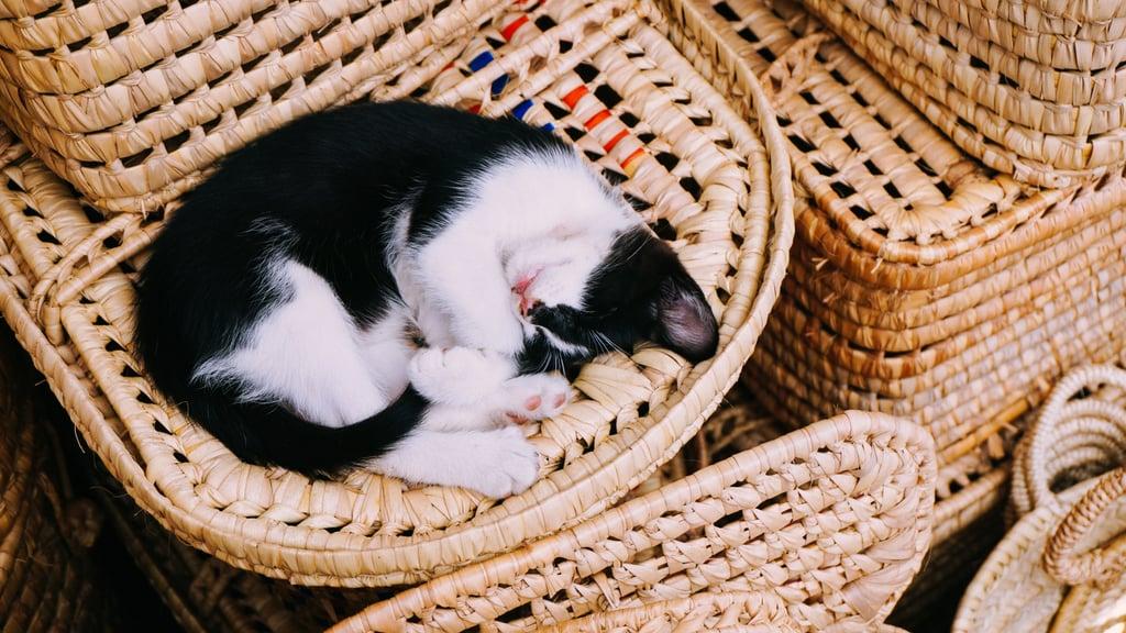 Just a little cat nap on a basket.