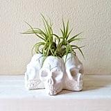 Skull Succulent Planters