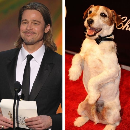 Berenice Bejo Says Uggie Will Retire Like Brad Pitt (Video)