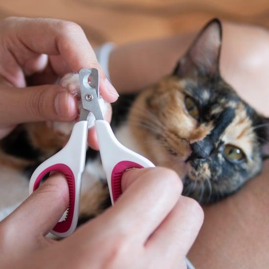 How Often Should I Trim My Cat's Nails?