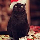 Salem the Cat in a Santa Hat