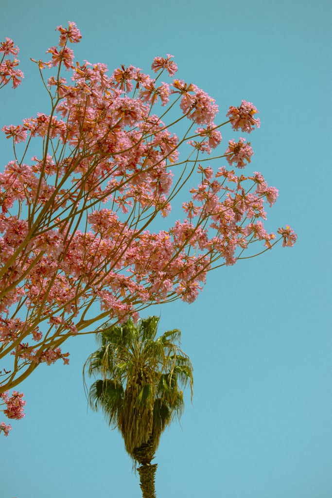 Flowers and Palm Tree iPhone Wallpaper