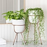 Rosa Planter With Stand
