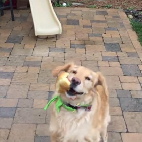 Dog Is Bad at Catching Food | Video