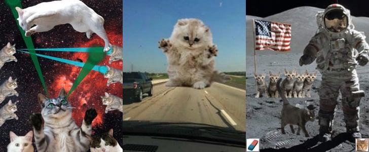 Cat Photo Apps