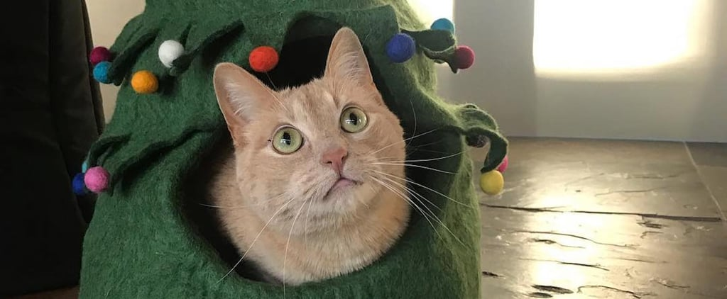 Celebrate the Holidays With a Christmas Tree Bed For Cats