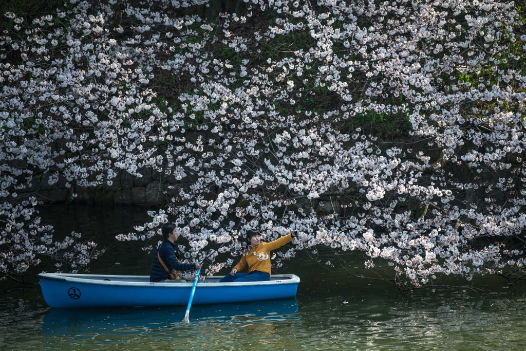 Japan's Cherry Blossoms Made a Beautiful (Early!) Appearance, and the Photos Are Breathtaking